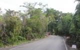 Джунгли Доминиканы