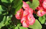 Удивительные растения Доминиканы
