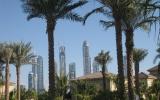 Объединённые Арабские Эмираты, вид из под пальмы в Дубаи